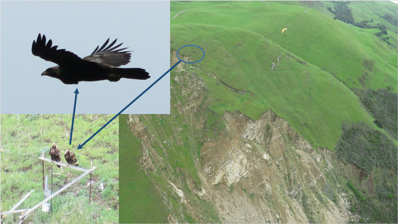 Golden Eagles come Fly with us, wild friends and magical moments